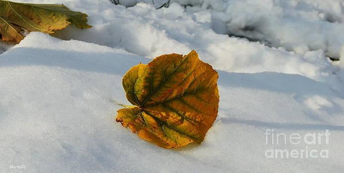 Winter impressions by Marija Djedovic