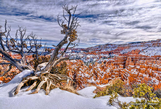 Christopher Holmes - Winter In Bryce Canyon