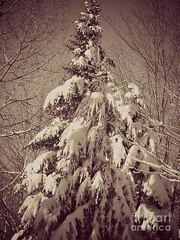 Winter in Maine by Christy Beal