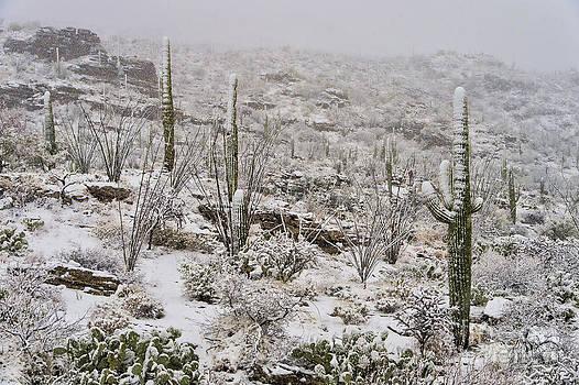Sandra Bronstein - Winter In The Desert