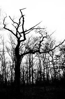 Winter in the Forest by Heather Bridenstine