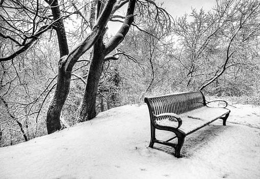 Winter in the Park by Claudio Bacinello