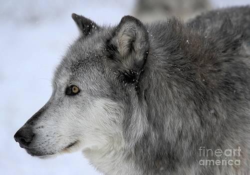 Adam Jewell - Winter Intensity