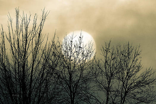 Winter Into Spring by Bob Orsillo