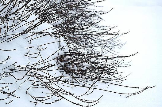 Gwyn Newcombe - Winter Lavender
