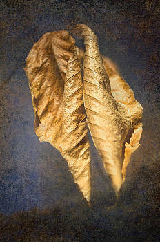Winter Leaves Abstract by Sandi OReilly