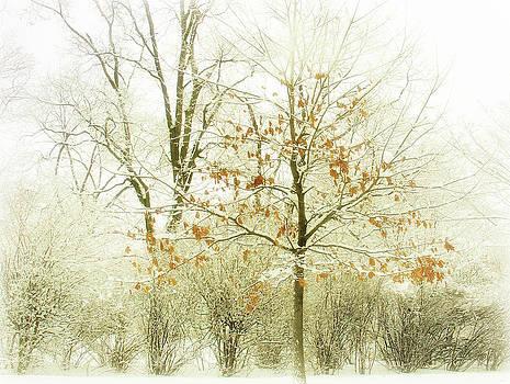 Julie Palencia - Winter Leaves