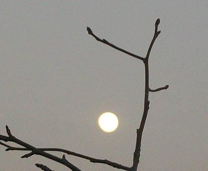 Winter Morn Moon by Wide Awake Arts