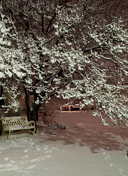 Winter Morning by Daphne Duddleston
