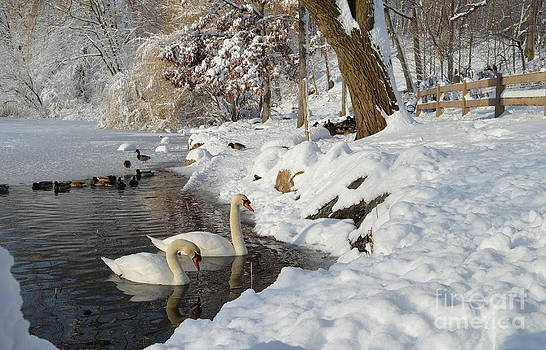 Winter on the Lake by Janet Davaros
