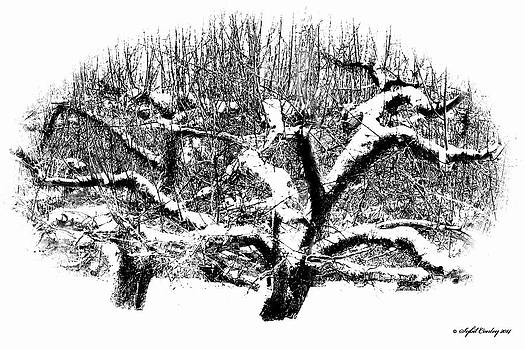 Winter Orchard by Sybil Conley