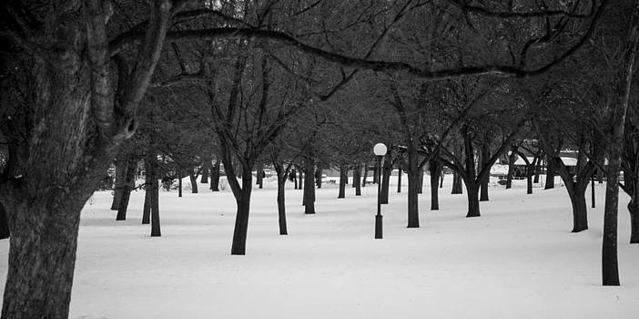 Winter Park by Adam Caron