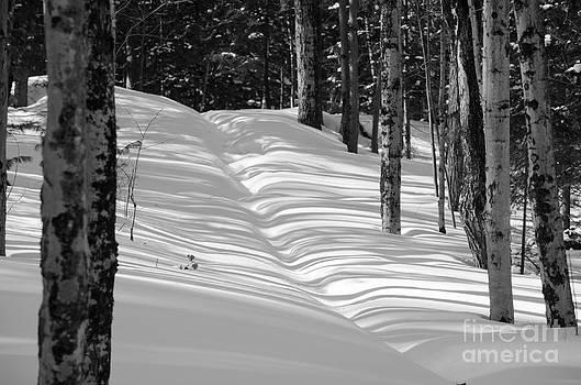 Winter Path BW by Tiffany Rantanen