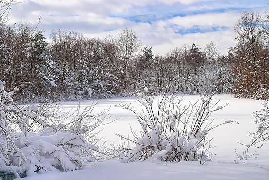 Winter Pond by Andrew Kazmierski