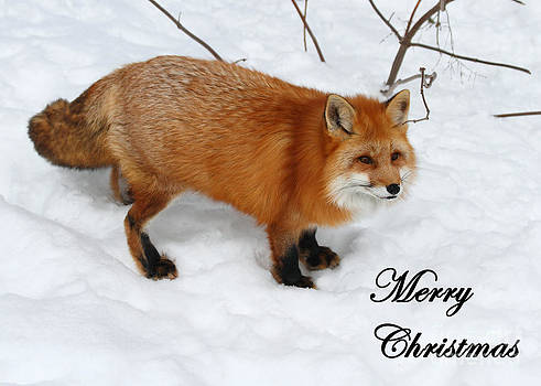 Winter Red Fox Greeting Card by Deanna Wright