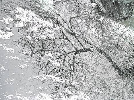 Alfred Ng - winter reflection
