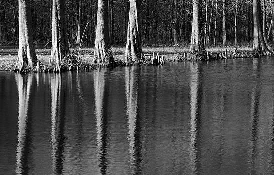 Winter Reflections - cypress tree art print by Jane Eleanor Nicholas