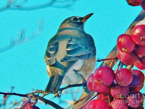 Judy Via-Wolff - Winter Robin and Crabapples