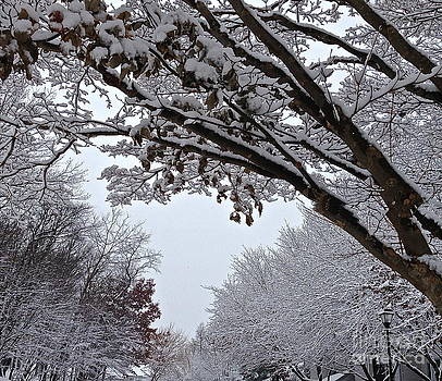 Winter shades by Delona Seserman