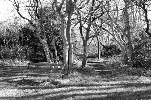 Bishopston Fine Art - Winter Shadowland