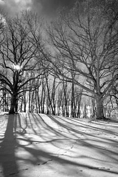 Winter Shadows by Jamieson Brown