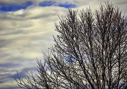 Dave Bosse - Winter Sky 2