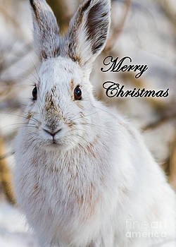 Winter Snowshoe Hare Greeting Card by Deanna Wright
