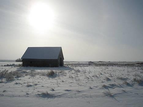Winter Sun  by Anne Peters