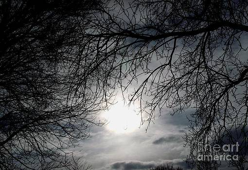 Gail Matthews - Winter Sun peeks throgh branches