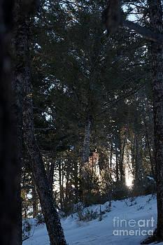 Birches Photography - Winter Sunbeams
