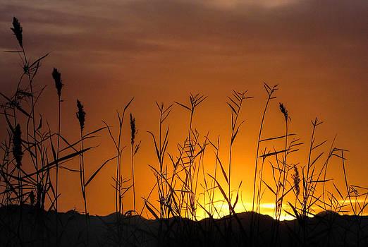 Winter sunrise by Tammy Espino