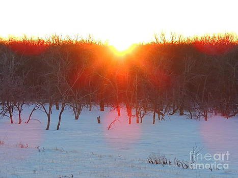 Winter sunset by Lisa Conner