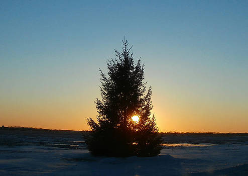 Winter Sunset Tree by Dan McCafferty