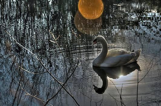 Winter Swan by Doug Farmer