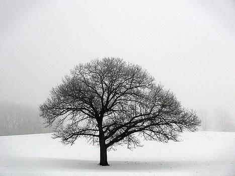 Winter Tree by Gina Harmeyer