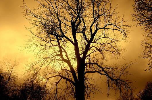 Winter tree by Karen Kersey
