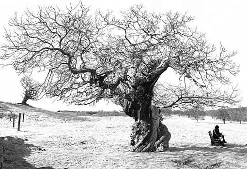 Winter Tree by Tony Partington
