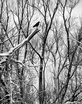 Gothicolors Donna Snyder - Winter Tree With Crow