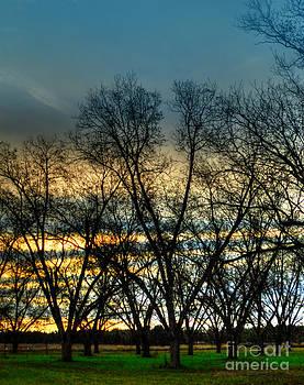 Dave Bosse - Winter Trees