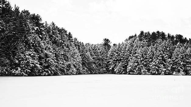 Edward Fielding - Winter Trees Mink Brook Hanover NH