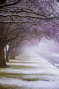 Svetlana Sewell - Winter Trees