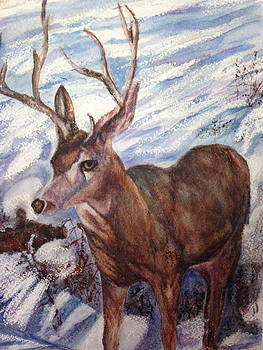 Winter Visitor by Carol Warner