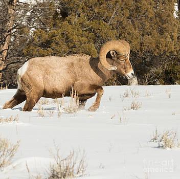 Birches Photography - Winter Walk