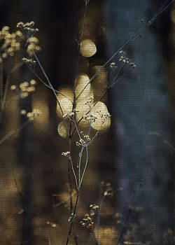 Winter Weeds by Jessie Gould