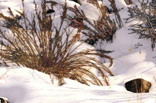 Kae Cheatham - Winter Weeds