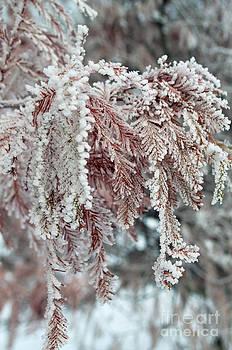 Gwyn Newcombe - Winter Whispers
