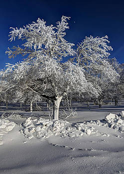 Winter Whites by Terry Cervi