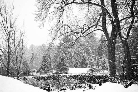 Winter Wonderland by Allan Millora Photography