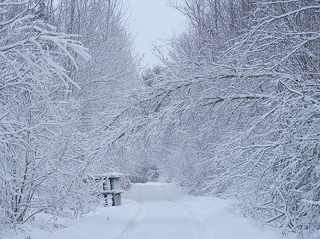 Winter Wonderland by Heather Sylvia