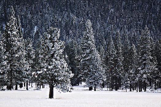 Winter Wonderland by Melanie Lankford Photography